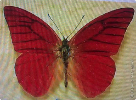 Моя вторая бабочка. фото 4