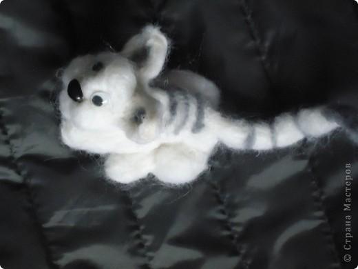 Лопоухий котик фото 2