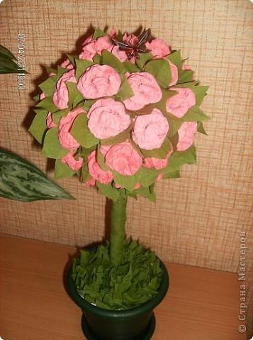 моё первое розовое дерево
