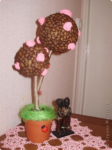 Давно любовалась кофейными деревьями в стране мастеров , решила смастерить и себе . Как получилось , судить вам - мастерам . фото 8