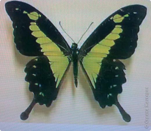 Третья моя бабочка, и пока самая лутшая для меня. фото 4
