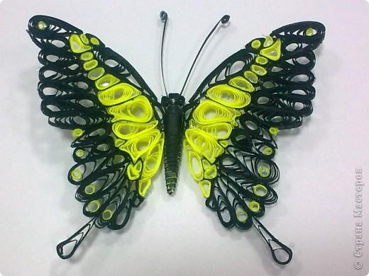 Третья моя бабочка, и пока самая лутшая для меня. фото 1
