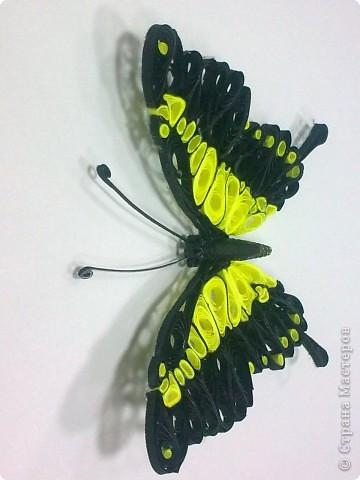 Третья моя бабочка, и пока самая лутшая для меня. фото 2