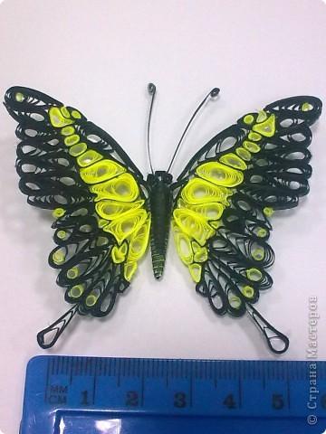 Третья моя бабочка, и пока самая лутшая для меня. фото 3