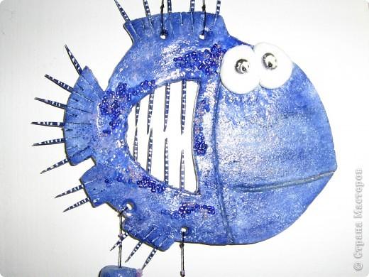 рыбки фото 4