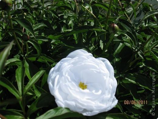 Цветы из ткани 2 фото 7