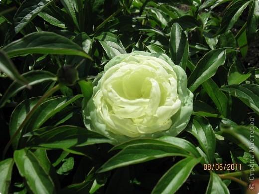 Цветы из ткани 2 фото 3