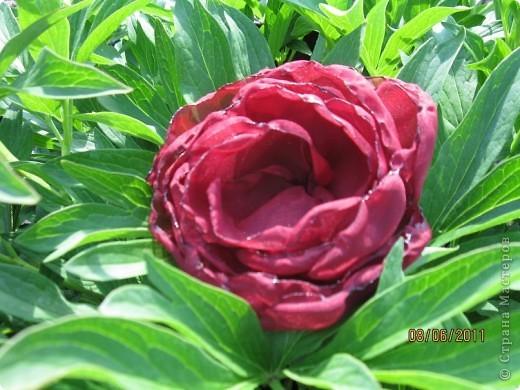 Цветы из ткани 2 фото 1