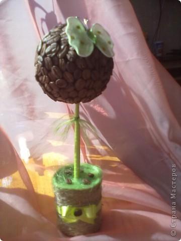 Кофейное дерево в салатовом цвете  фото 1