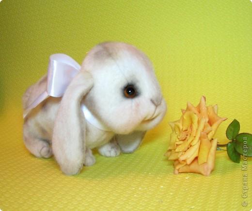 Маленькая, сладенькая, милая девочка, приша познакомиться в вами и поднять вам настоение)))) фото 5