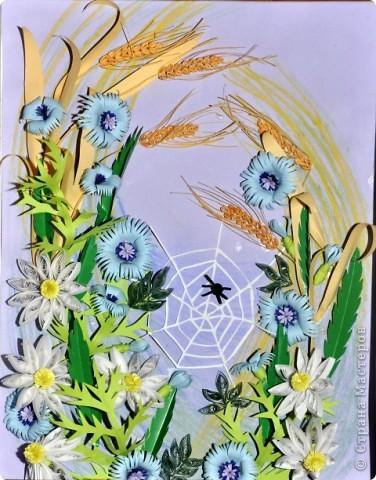Цветы полевые фото 2