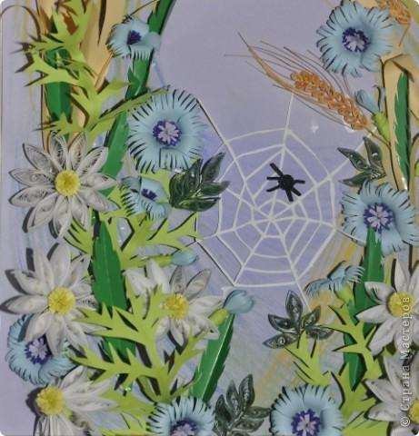 Цветы полевые фото 3