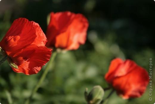 Маленький оазис  - Ботанический сад на Петроградке :) фото 19