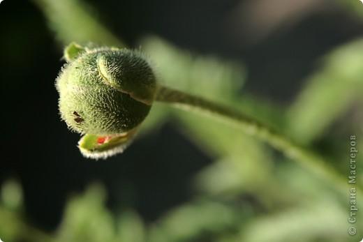 Маленький оазис  - Ботанический сад на Петроградке :) фото 17