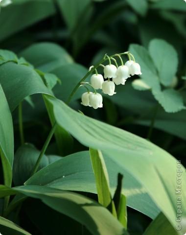 Маленький оазис  - Ботанический сад на Петроградке :) фото 18