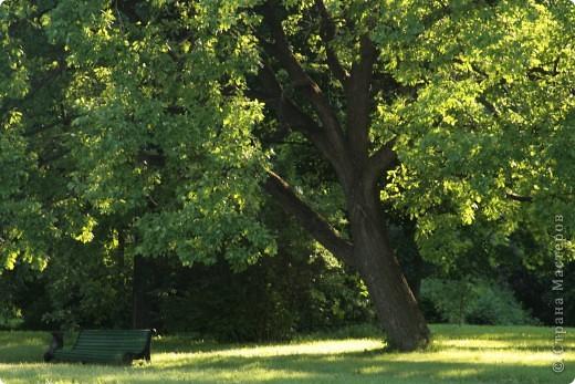 Маленький оазис  - Ботанический сад на Петроградке :) фото 24