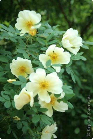 Маленький оазис  - Ботанический сад на Петроградке :) фото 20