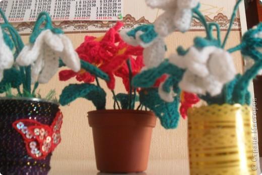 Мои цветы Ландыши и примула. фото 2