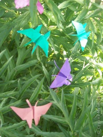 Бабочки-оригами. фото 1