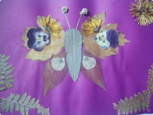 Бабочки-оригами. фото 4