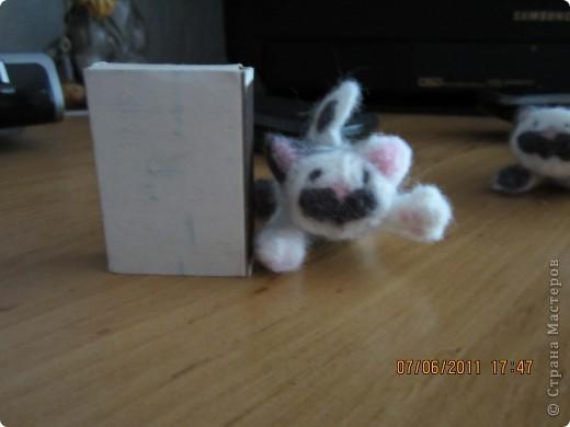 этого котёнка я делала на заказ (хотя мне все во лишь 12 лет) фото 5