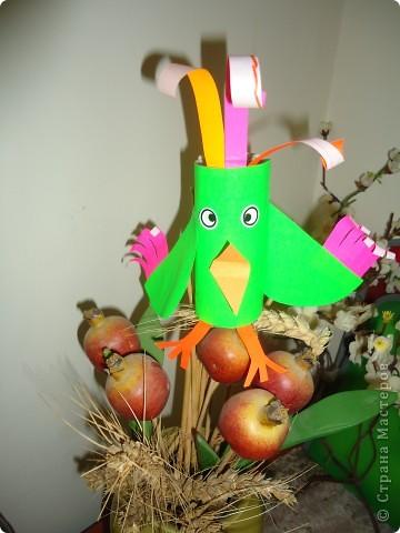 Разноцветные попугаи фото 5