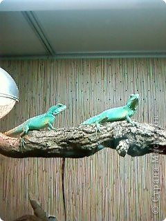 Мы возле входа в Зоопарк фото 7