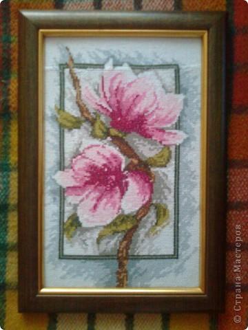 Цвіт магнолії фото 1