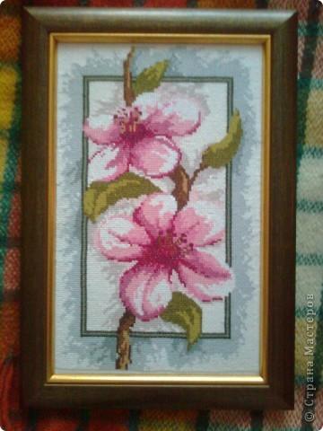Цвіт магнолії фото 2