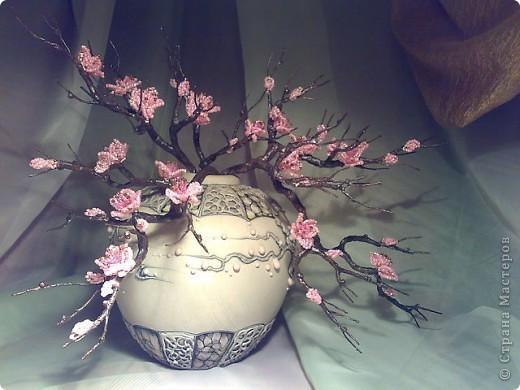 Веточки сакуры