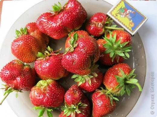 Добрый день всем любителям клубнички!!Сегодня я хочу рассказать о удивительном сорте этой чудесной ягоды - Чамора Туруси. Сорт Японской селекции, лет 10 он прекрасно растет и плодоносит у нас, спутать его с другими сортами просто невозможно из за формы ягоди земляничного вкуса. фото 1
