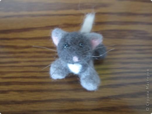 Доброго времени суток меня зовут Васька я любопытный,игривый котёнок фото 1