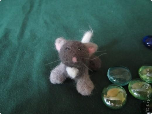 Доброго времени суток меня зовут Васька я любопытный,игривый котёнок фото 3
