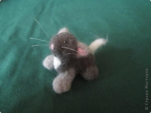 Доброго времени суток меня зовут Васька я любопытный,игривый котёнок фото 4