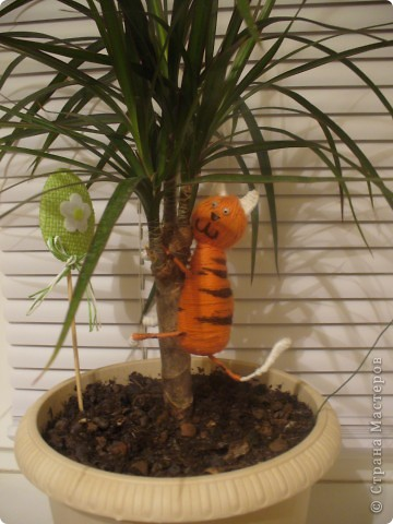 Котик на дереве фото 2