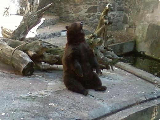 Мы возле входа в Зоопарк фото 8