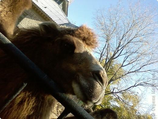Мы возле входа в Зоопарк фото 9