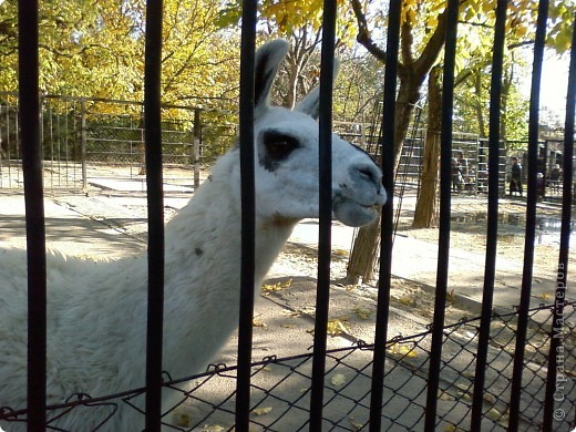 Мы возле входа в Зоопарк фото 10