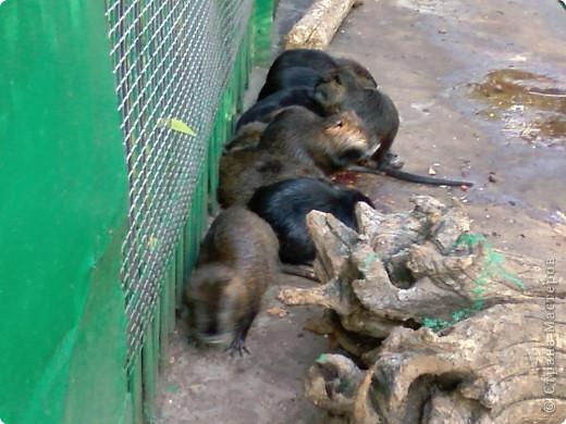 Мы возле входа в Зоопарк фото 12