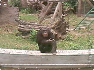 Мы возле входа в Зоопарк фото 14