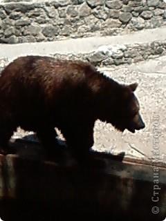 Мы возле входа в Зоопарк фото 28