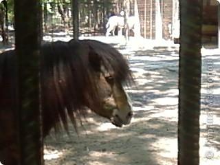 Мы возле входа в Зоопарк фото 31