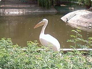 Мы возле входа в Зоопарк фото 44