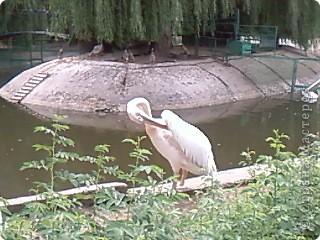Мы возле входа в Зоопарк фото 45