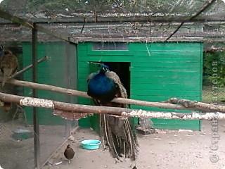 Мы возле входа в Зоопарк фото 47