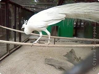 Мы возле входа в Зоопарк фото 50