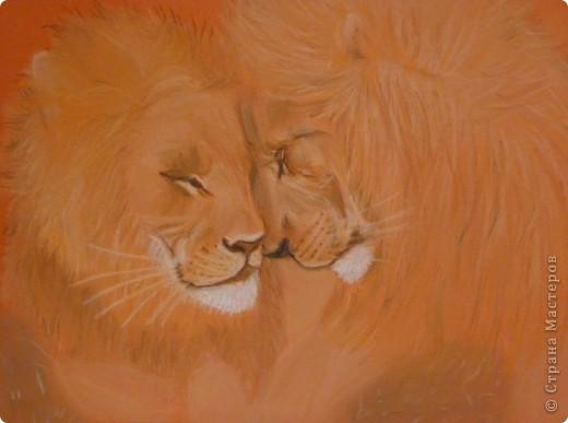Львы... фото 1