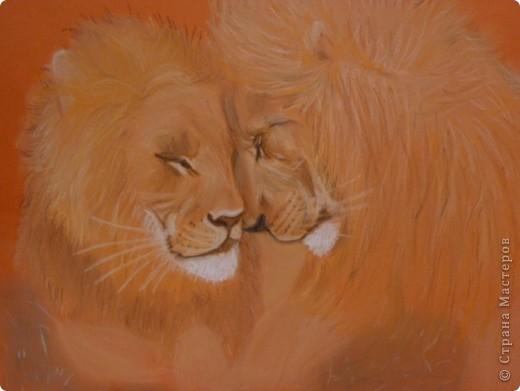 Львы... фото 2