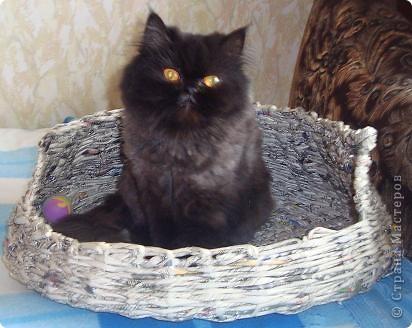 Корзина для кошки (проба) фото 2