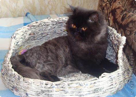 Корзина для кошки (проба) фото 1